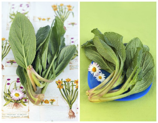 Borage-Collage-by-DinnerInVenice